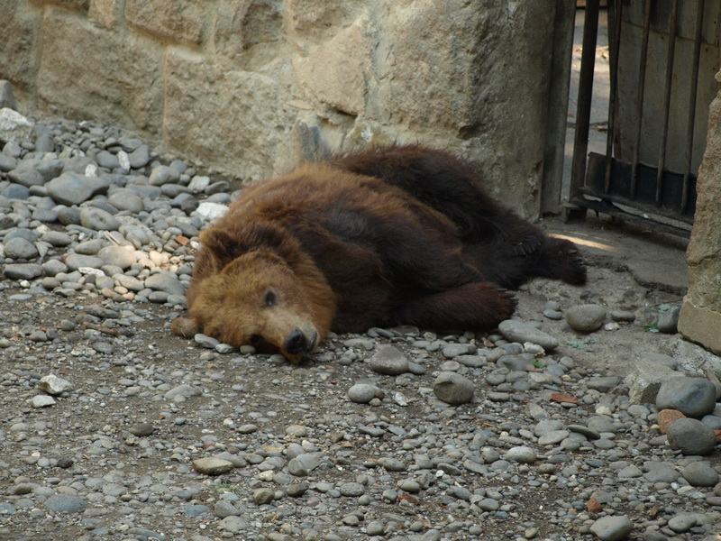 Vizualizati imaginile din articolul: Grădina zoologică – deschisă doar sâmbăta şi duminica