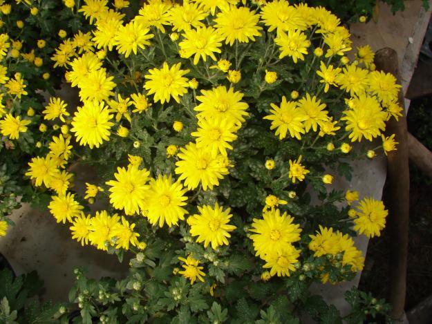 Vizualizati imaginile din articolul: Expoziţie de flori cu vânzare