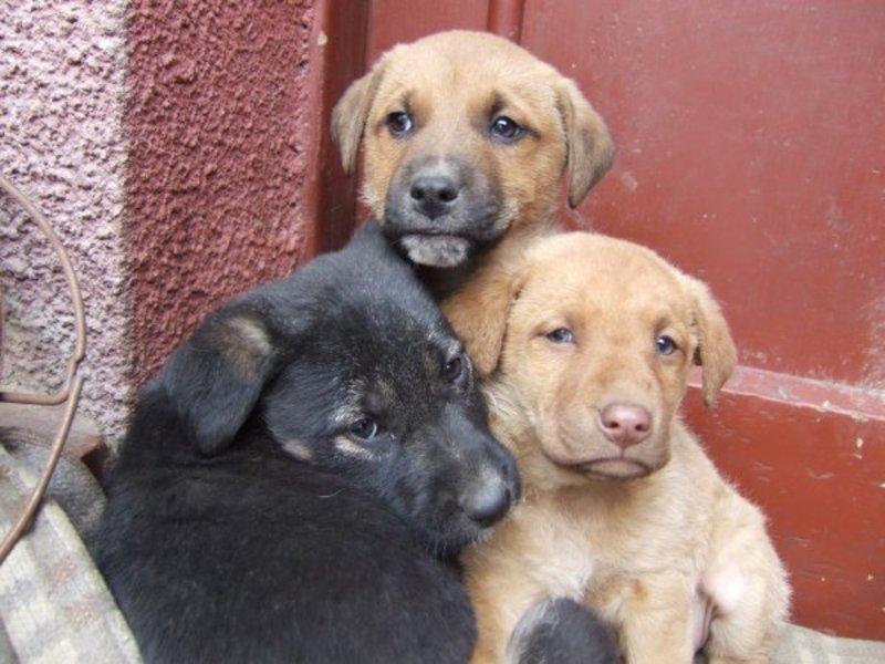 Vizualizati imaginile din articolul: 25 de câini fără stăpân pleacă în Germania