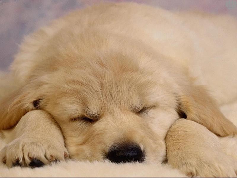 Vizualizati imaginile din articolul: A creşte un câine – un act responsabil