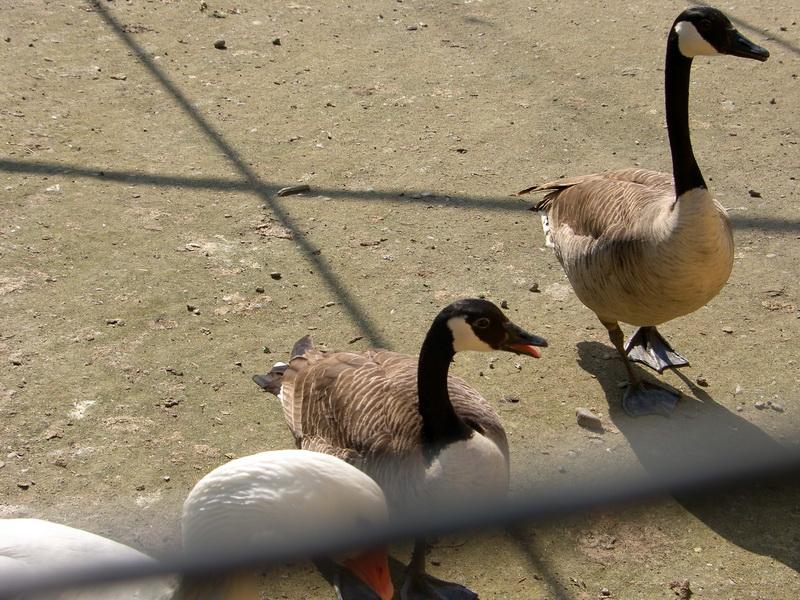 Vizualizati imaginile din articolul: De Ziua Mondială a Diversităţii Biologice - intrare gratuită la Zoo Tîrgu-Mureş