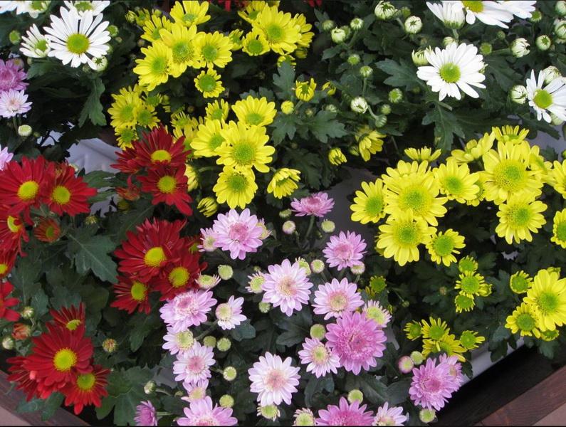 Vizualizati imaginile din articolul: Flori pentru cei care au plecat…