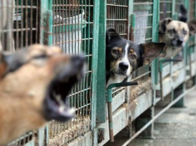 Vizualizati imaginile din articolul: Câinii comunitari – vaccinaţi, sterilizaţi, microcipaţi