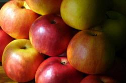 Vizualizati imaginile din articolul: Toamna mărului mureşean