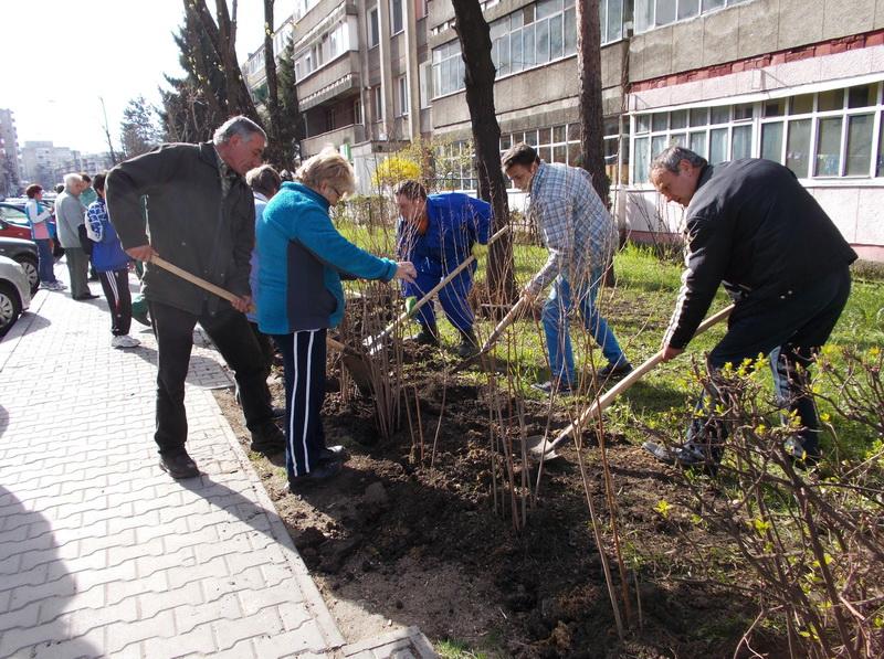 Vizualizati imaginile din articolul: PLANTĂRI DE ARBORI ŞI GARD VIU ÎN TÎRGU MUREŞ