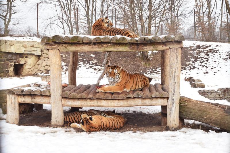 Vizualizati imaginile din articolul: Grădina Zoologică, alternativă pentru timpul liber