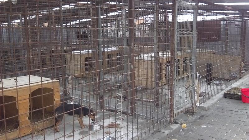 Vizualizati imaginile din articolul: Zeci de câini fără stăpâni vor pleca în Germania, la final de aprilie