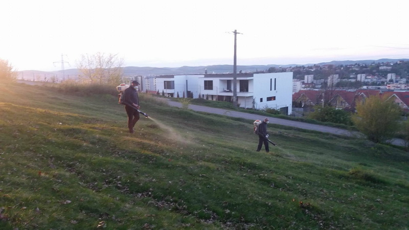 """Vizualizati imaginile din articolul: A Marosvásárhelyi Polgármesteri Hivatal elindította a kullancsok elleni """"küzdelmet'"""