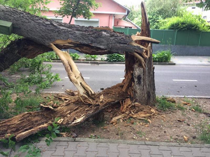 Vizualizati imaginile din articolul: Kidőlt fa a Vársétányon! A korhadt fák közveszélyt jelentenek, a Polgármesteri Hivatal pedig nem hozhat intézkedéseket a szakbizottság véleményezése nélkül, amelynek tagjai a nemkormányzati szervezetek és a helyi tanácsosok
