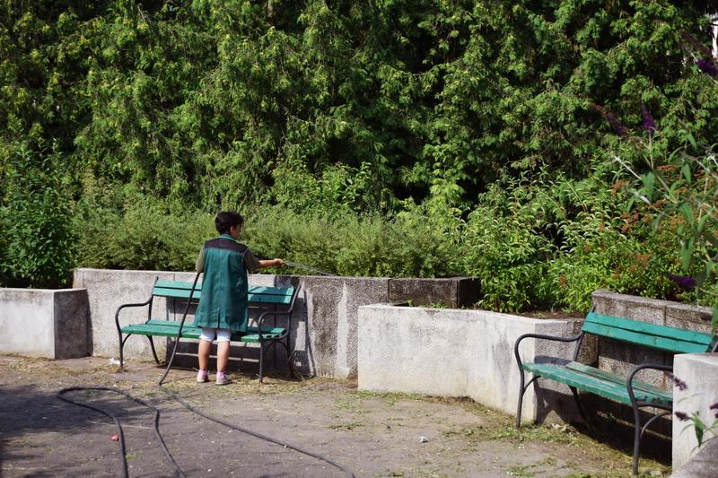Vizualizati imaginile din articolul: Lucrări diverse desfăşurate de Serele primăriei