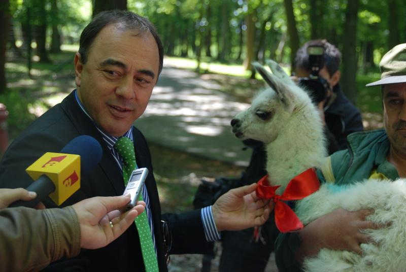 Vizualizati imaginile din articolul: La Zoo Tîrgu-Mureş, un pui de lamă şi-a găsit naşul