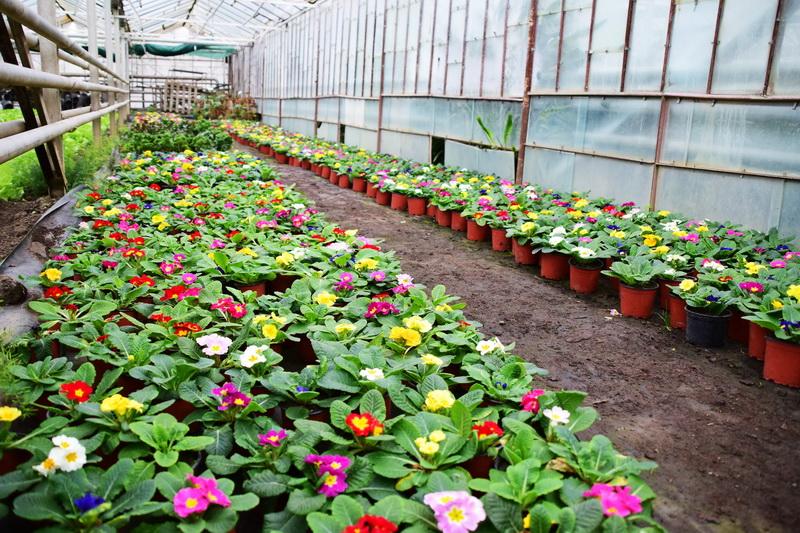 Vizualizati imaginile din articolul: Pregătiri pentru sezonul de primăvară la Administrația Serelor din cadrul Primăriei Târgu Mureș