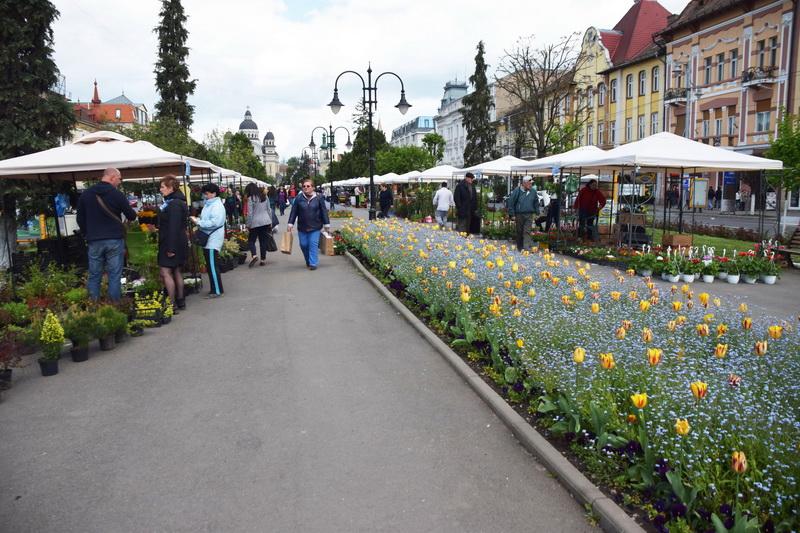 Vizualizati imaginile din articolul: Primăria municipiului Târgu Mureş oferă spre vânzare flori cu prilejul sărbătorilor de primăvară