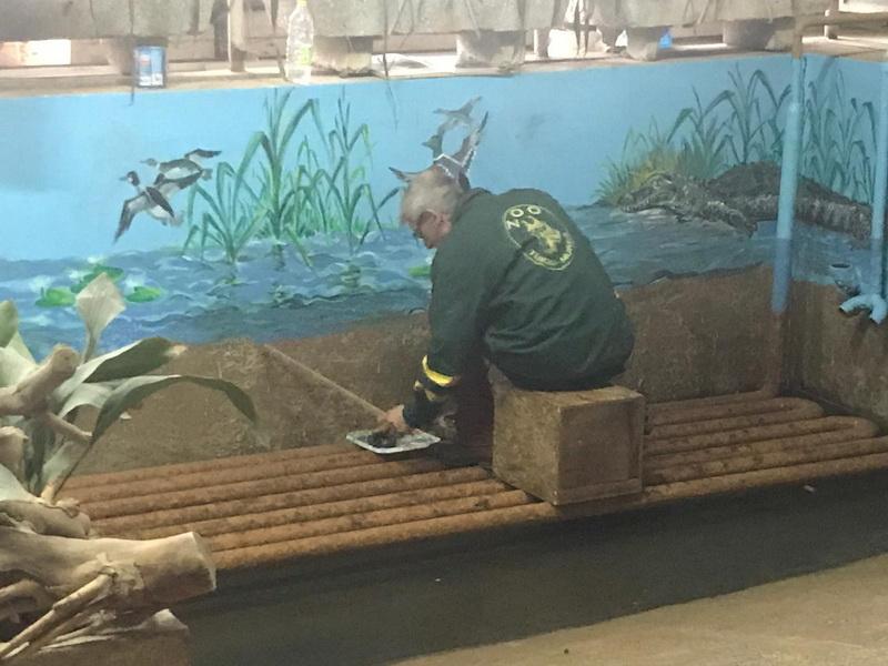 Vizualizati imaginile din articolul: Zoo Târgu Mureș se pregătește pentru primăvară!