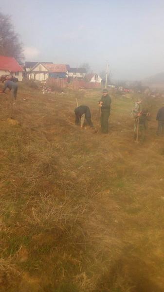 Vizualizati imaginile din articolul: Primăria Târgu Mureș îmbogățește pădurea din Beșa, cu peste 500 de puieți!