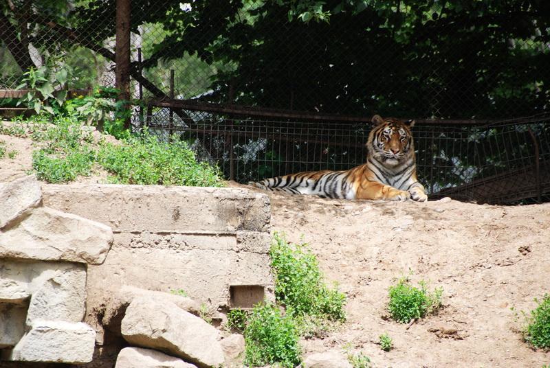Vizualizati imaginile din articolul: Gyermeknap alkalmából Rekordbevétel az állatkertben