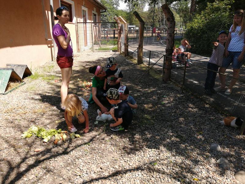 Vizualizati imaginile din articolul: Egyedülálló élmény a marosvásárhelyi gyermekonkológiára beutalt kicsiknek: virtuális túra az állatkertben!