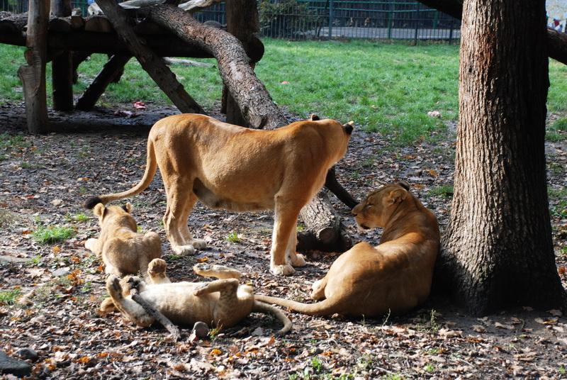 Vizualizati imaginile din articolul: Az Állatok Világnapját a Marosvásárhelyi Polgármesteri Hivatal humanitárius kampányával ünnepelték az Állatkertben