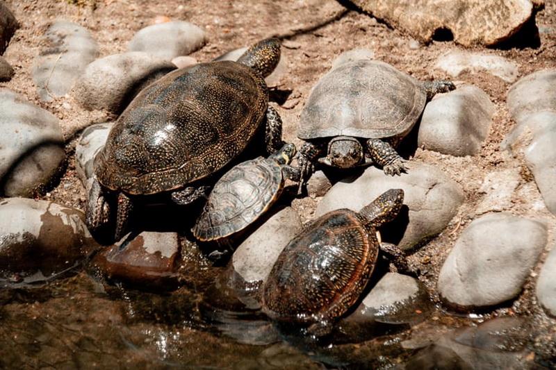 """Vizualizati imaginile din articolul: """"Să ne cunoaștem mai bine!' Un nou program pentru cei mici, în vacanța de vară, la Zoo Târgu Mureș"""
