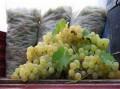 Vânzarea de struguri pentru vin – numai în două pieţe din municipiu!