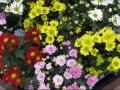 Eladással egybekötött virágkiállítás