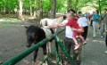 1 iunie – intrare gratuită la ZOO Tîrgu Mureș pentru copii