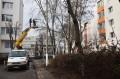 Toaletări de arbori în mai multe cartiere din Tîrgu Mureş