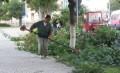 Principalele acțiuni ce se desfășoară în perioada 21 - 25 martie 2011 în parcurile și zonele verzi