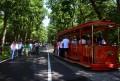 """""""Tomy"""" – Trenuleţul de la Platoul Corneşti îşi modifică programul"""